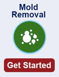mold remediation in Georgia TN